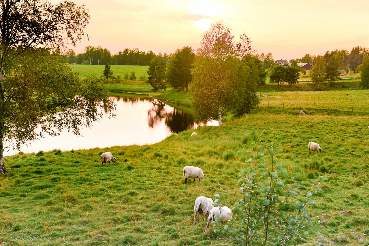 Norrland - Sweden