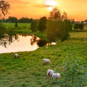 Outside of Vindeln - Sweden