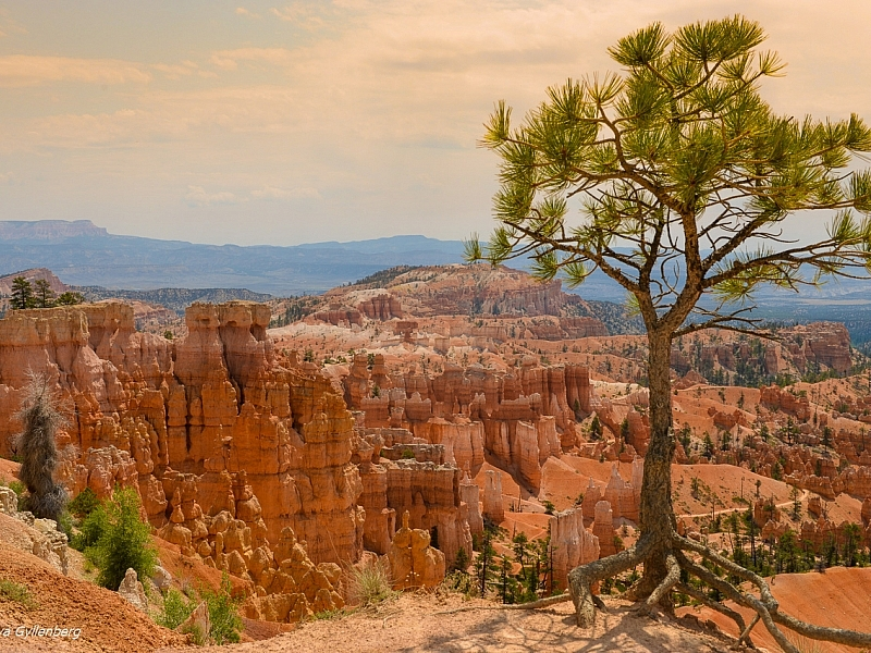 Bryce Canyon - Utah - USA