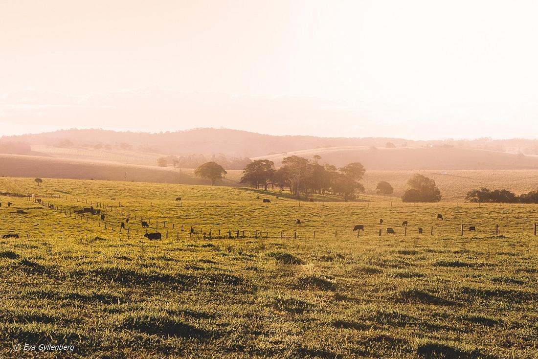 Atherton tablelands-Queensland-Australia