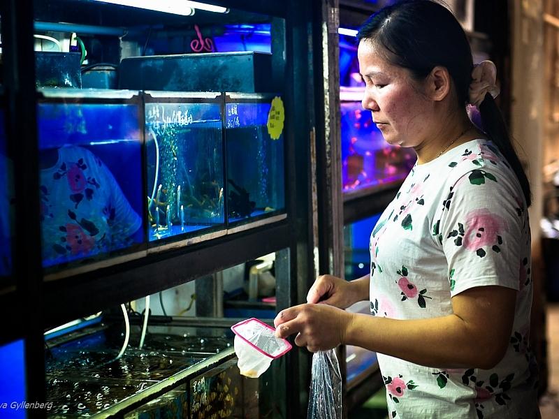 Fish Market - Hong Kong