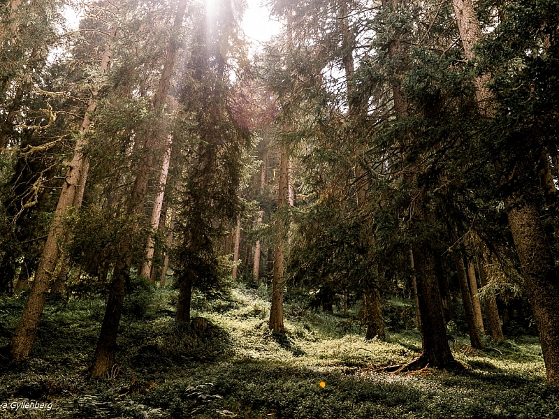 Italy-South Tyrol-Dolomites-Forest